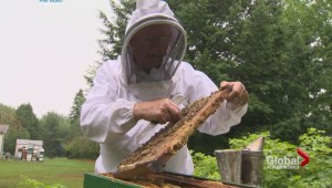 Beekeepers from across Canada meeting in Moncton