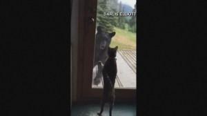 Cat scares black bear off Alaska porch