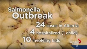 Butterfield Acres stop poultry handling due to salmonella concerns