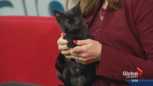 Pet of the Week: Blackbear and Drake