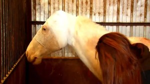 Rescue centre working hard after 13 horses found abandoned, neglected