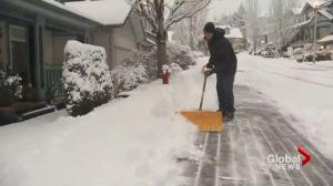 Snow hits Metro Vancouver in time for morning rush hour