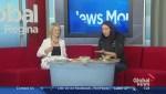 Cooking with Saskatchewan ingredients