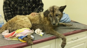 Alberta woman finds missing dog in culvert