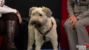 Edmonton Humane Society: Maggie