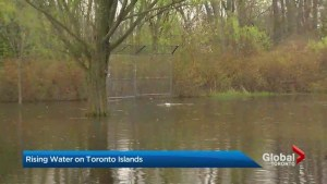 Baseball field on Toronto Islands flooded with carp