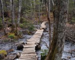 Blue Mountain Birch Cove Lakes report slammed by province