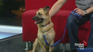 Pet of the Week: Gemma
