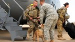 4 years later, U.S. Army veteran reunited with dog he served with in Afghanistan