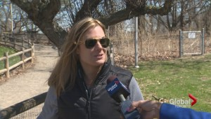Torontonians complain that High Park area unsafe for dogs