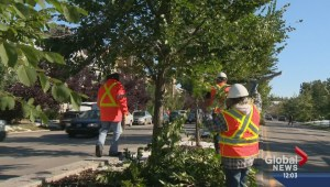 Tree branch cleanup begins