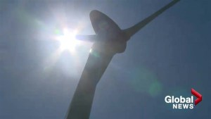 Calgary conservationist warns of turbine risk to birds of prey