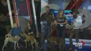 National Pet Adoption Weekend