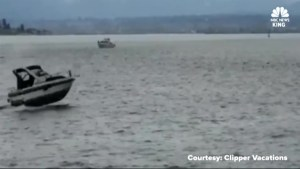 Speeding boater strikes, runs over whale in Puget Sound