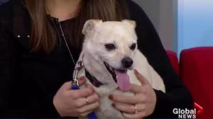 Adopt a Pet: Chico looking for his new home