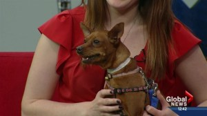 Pet of the Week: Lola