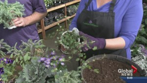 Gardening: Hanging Basket 911