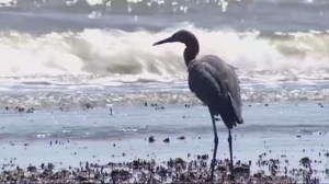 BP reaches settlement with states affected by 2010 oil spill
