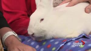 Adopt a Pet: Elfie the bunny