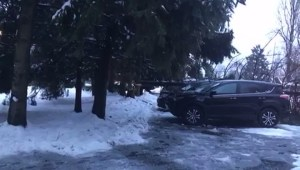 Tree down on car in Surrey