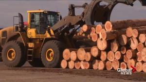 U.S. president takes aim at B.C. lumber industry