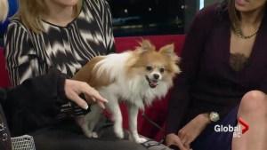 Adopt a Pet: Jackson