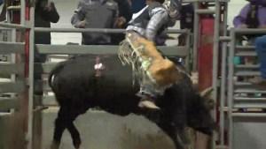 Bull-a-rama raises over $60,000