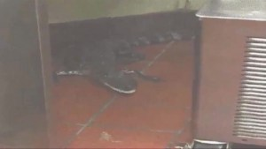 Prankster charged for throwing alligator through drive-thru window