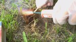 City to use new method for gopher control
