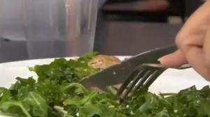 Bagged salads may contain salmonella