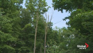Ile-Perrot forest fight continues