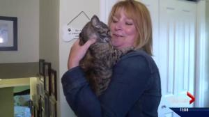 The cat came back: Fort McMurray wildfire no match for Flirt the cat