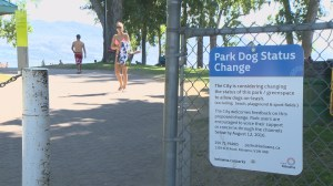 Leashed dogs in Kelowna parks? City wants your input