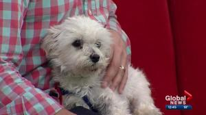 Pet of the Week: Gus