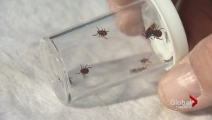 Toronto Public Health testing ticks for Lyme Disease