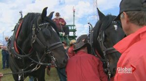 Retracing the tracks of record-breaking horse and wagon hitch