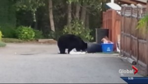 Okanagan Residents Urged to be Bear Smart