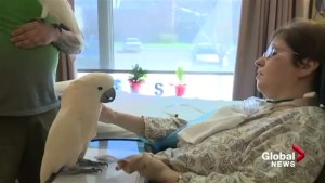 Parrots forming friendships with long-term care residents in Lethbridge