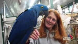 Parrot refuge in Coombs unravels following death of owner