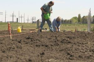 Community gardens replacing backyard plots