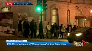 Montrealers demonstrate for animal rights
