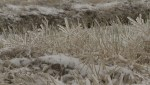 Bad harvest conditions hurting western Canadian farmers