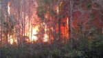 Book burning gone wrong blamed for 400-acre forest fire in Florida