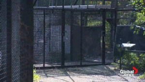 Deadly tiger attack in Winnipeg zoo