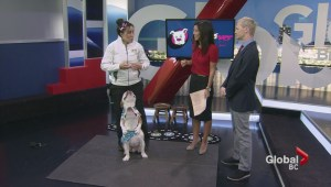 Super Dogs show off their tricks and talents