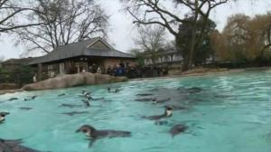 London Zoo begins census of every animal at the zoo