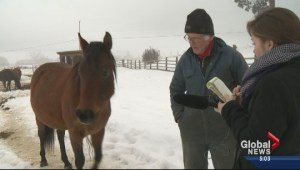 Armstrong horse owner facing charges speaking out against SPCA