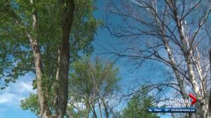 Trees in Valleyview poisoned