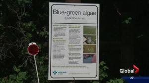 2 Edmonton-area lakes under blue-green algae advisories
