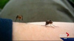 Risk of West Nile in Saskatoon despite low mosquito numbers